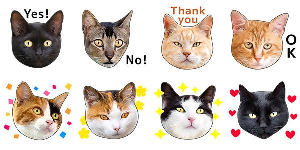 可愛くてリアルな猫lineスタンプに新作登場 肉球も Womanapps